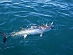 fishandlove_slures_thon_06